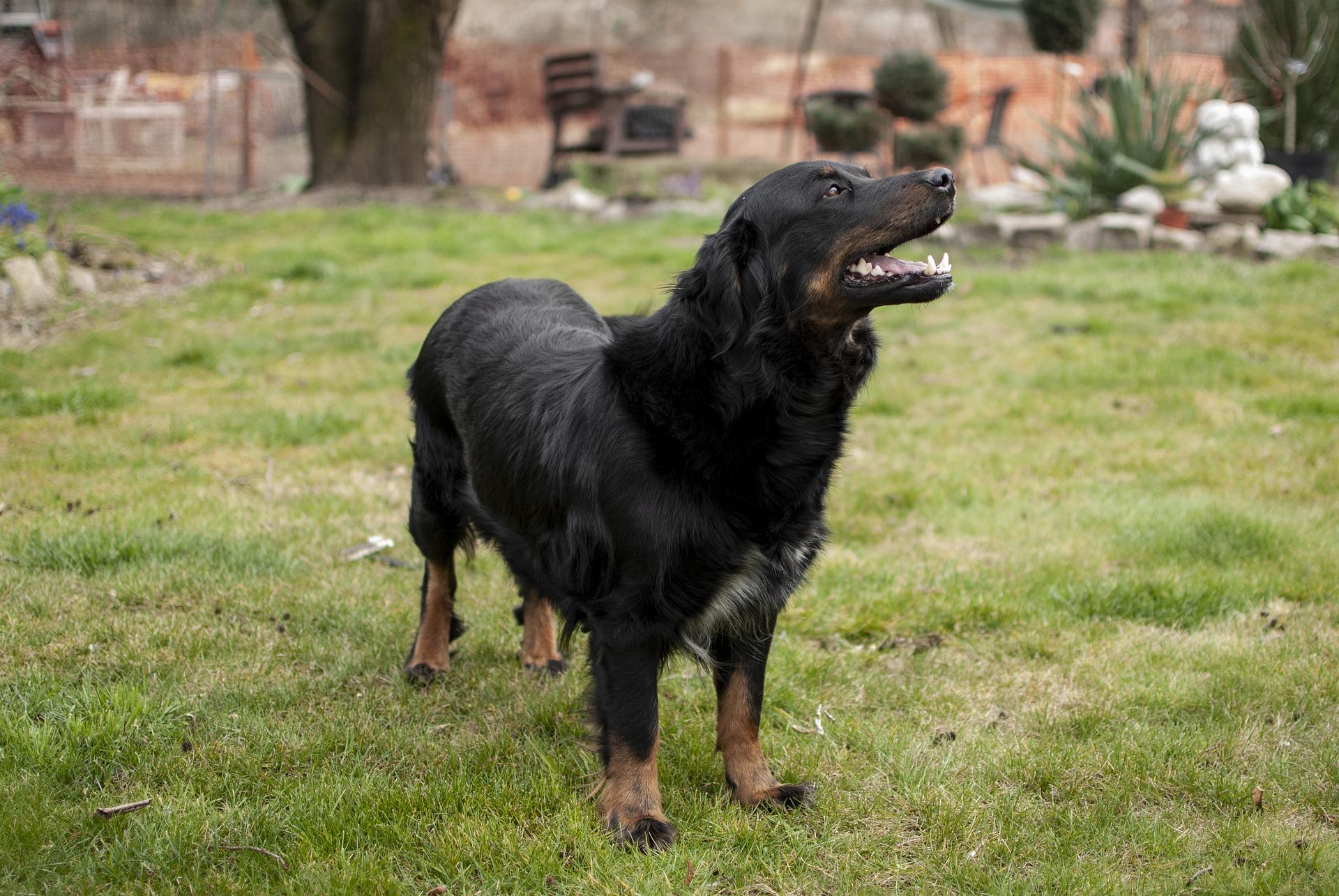 BARF | Großer Hund